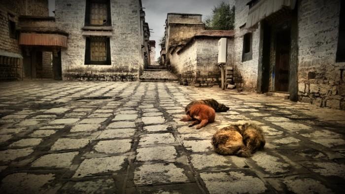 Hunder ved Sera tempel