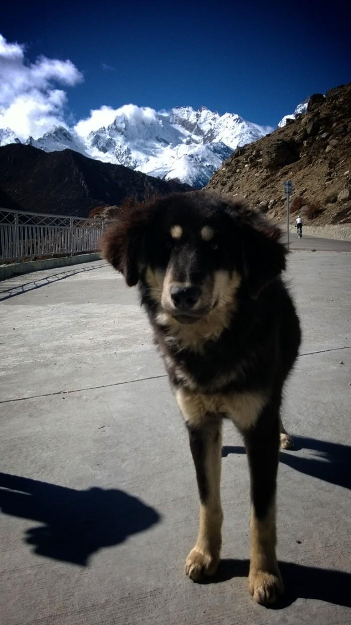 Envakkervenn jeg fikk,søt og kosete løshund