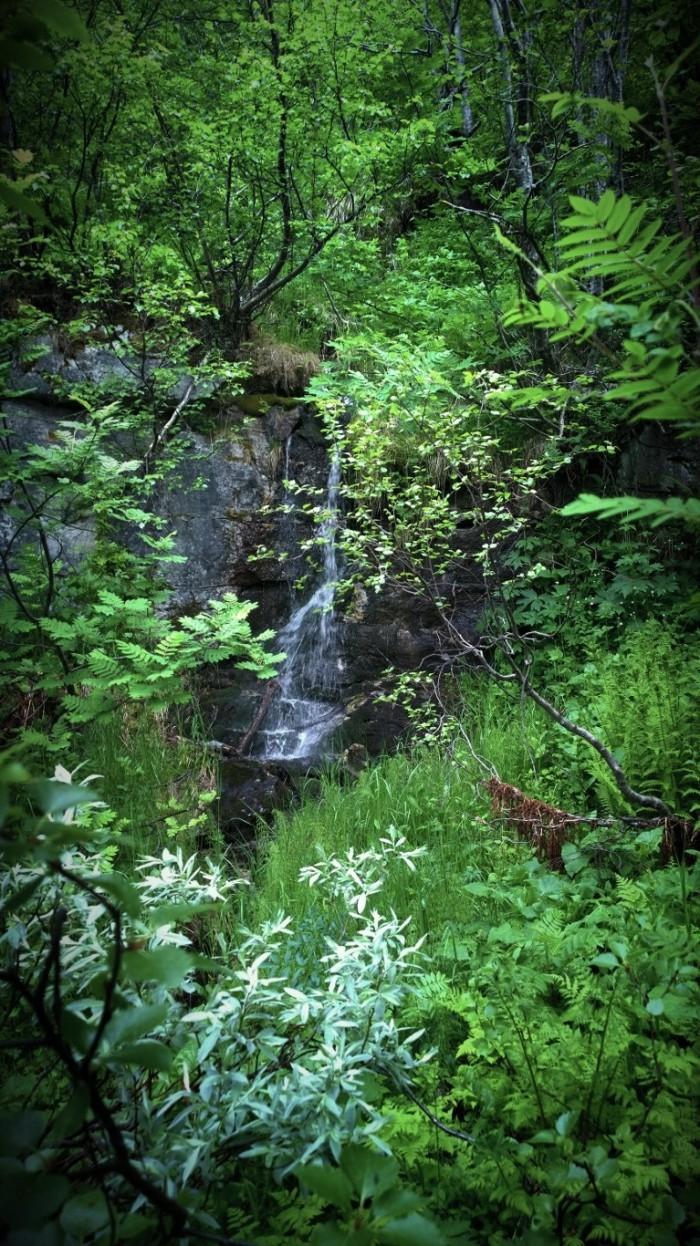 Vannfall og jungel