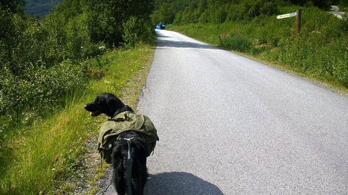 Tarco viser veien til Østerbø