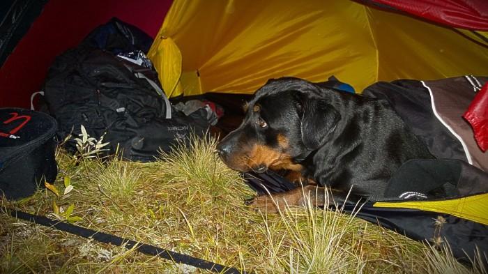Bølla skjønner ikke helt dette med telt