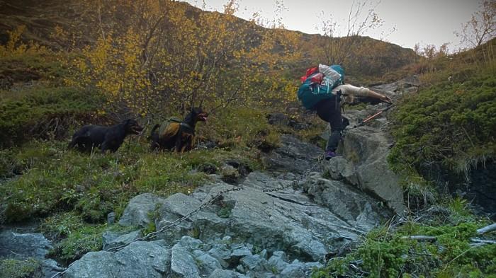Silje viser hundene hvordan man klatrer