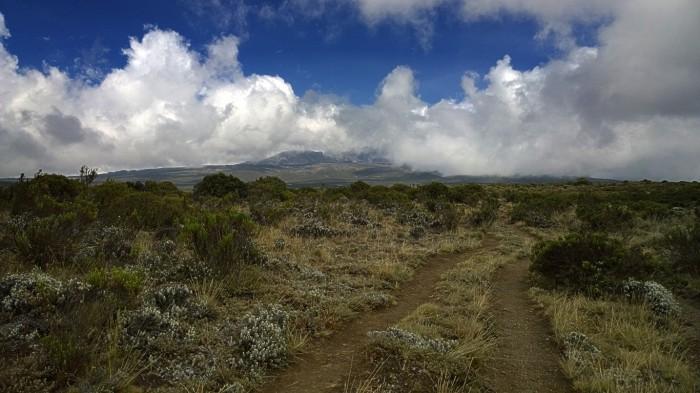 Ved en klar dag kan man se Kibo, toppen av Kilimanjaro fra Shira platået