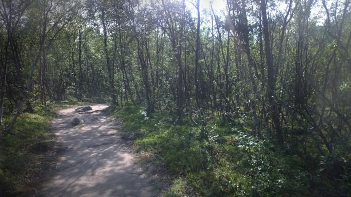 Mye skog